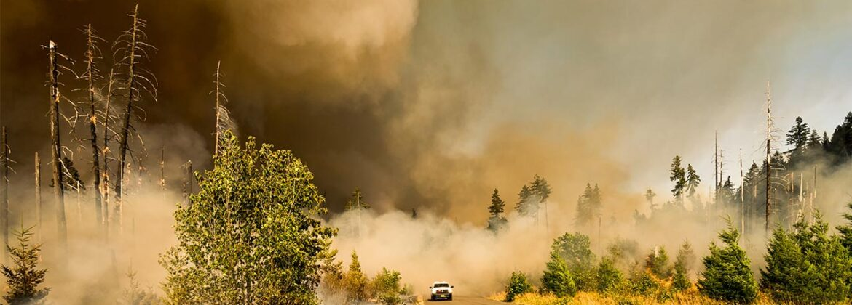 brush fire image